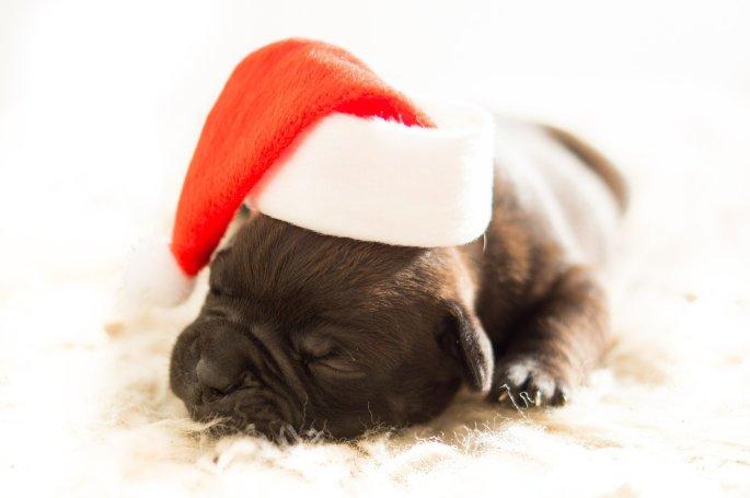 Weihnachten Tiere Hund